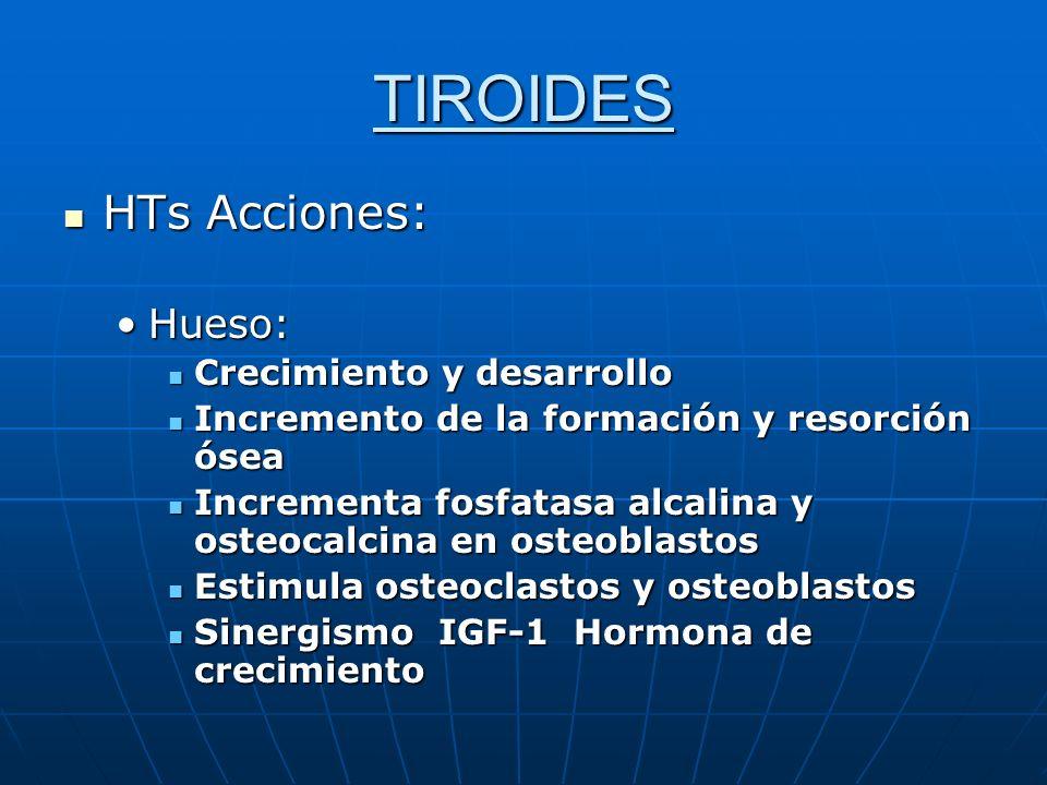 TIROIDES HTs Acciones: HTs Acciones: Hueso:Hueso: Crecimiento y desarrollo Crecimiento y desarrollo Incremento de la formación y resorción ósea Increm
