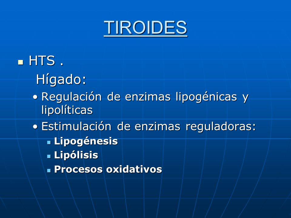 TIROIDES HTS. HTS. Hígado: Hígado: Regulación de enzimas lipogénicas y lipolíticasRegulación de enzimas lipogénicas y lipolíticas Estimulación de enzi
