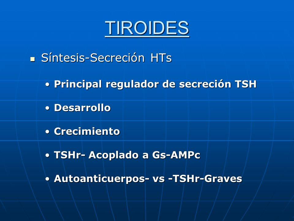 TIROIDES Síntesis-Secreción HTs Síntesis-Secreción HTs Principal regulador de secreción TSHPrincipal regulador de secreción TSH DesarrolloDesarrollo C