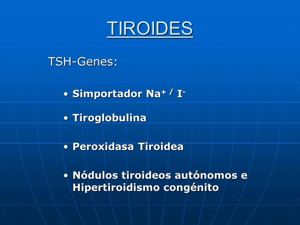 TIROIDES TSH-Genes: Simportador Na + / I -Simportador Na + / I - TiroglobulinaTiroglobulina Peroxidasa TiroideaPeroxidasa Tiroidea Nódulos tiroideos a