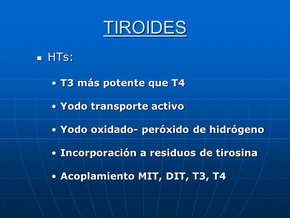 TIROIDES HTs: HTs: T3 más potente que T4T3 más potente que T4 Yodo transporte activoYodo transporte activo Yodo oxidado- peróxido de hidrógenoYodo oxi