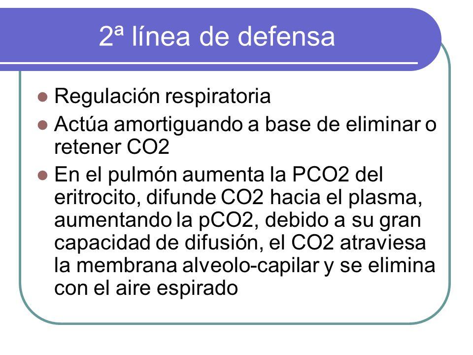 2ª línea de defensa Regulación respiratoria Actúa amortiguando a base de eliminar o retener CO2 En el pulmón aumenta la PCO2 del eritrocito, difunde C