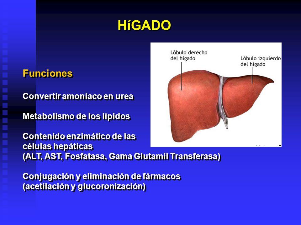 El hígado puede perder tres cuartos del total de sus células antes de dejar de funcionar.