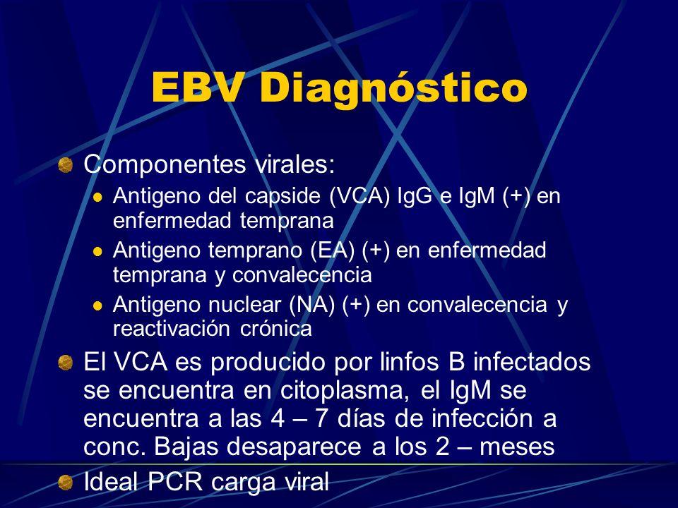 Componentes virales: Antigeno del capside (VCA) IgG e IgM (+) en enfermedad temprana Antigeno temprano (EA) (+) en enfermedad temprana y convalecencia
