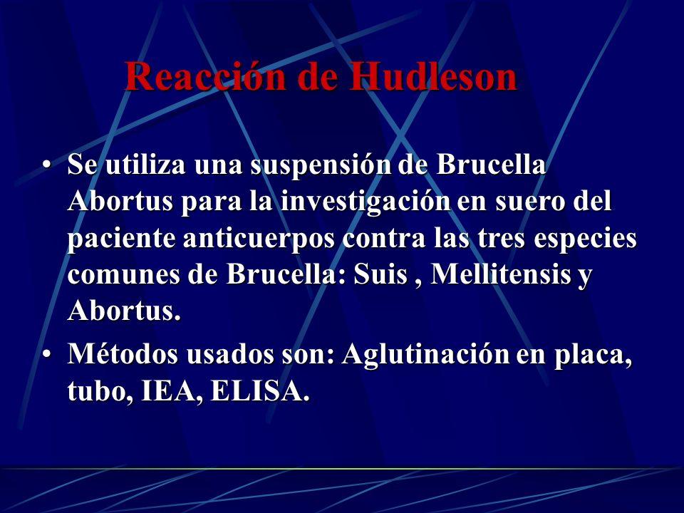 Se utiliza una suspensión de Brucella Abortus para la investigación en suero del paciente anticuerpos contra las tres especies comunes de Brucella: Su