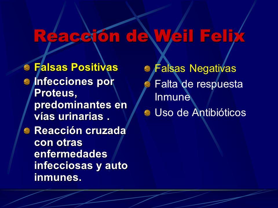 Falsas Negativas Falta de respuesta Inmune Uso de Antibióticos Falsas Positivas Infecciones por Proteus, predominantes en vías urinarias. Reacción cru