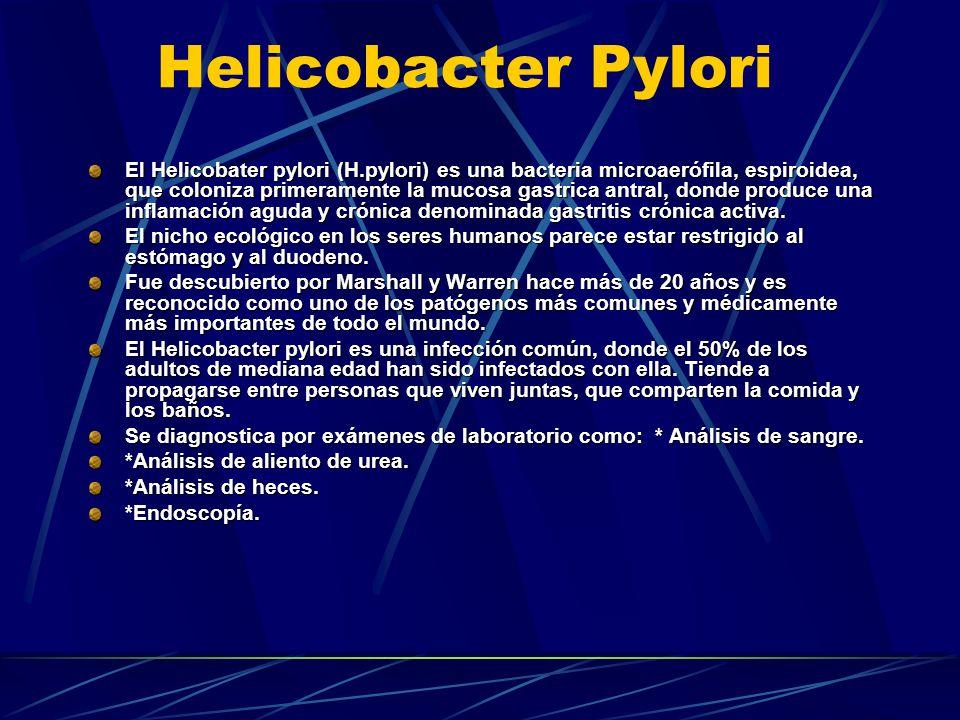 Helicobacter Pylori El Helicobater pylori (H.pylori) es una bacteria microaerófila, espiroidea, que coloniza primeramente la mucosa gastrica antral, d