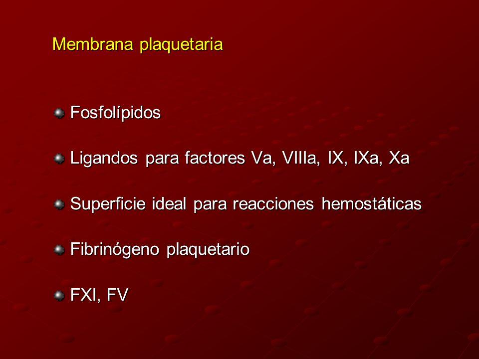Membrana plaquetaria Fosfolípidos Ligandos para factores Va, VIIIa, IX, IXa, Xa Superficie ideal para reacciones hemostáticas Fibrinógeno plaquetario