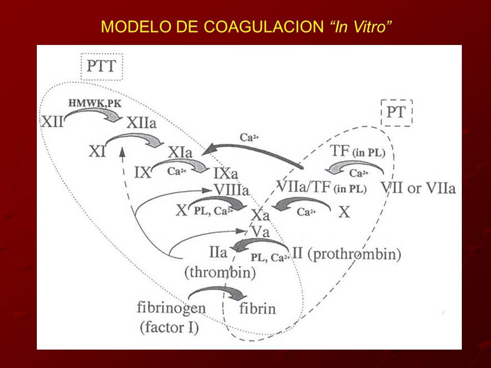 MODELO DE COAGULACION In Vitro