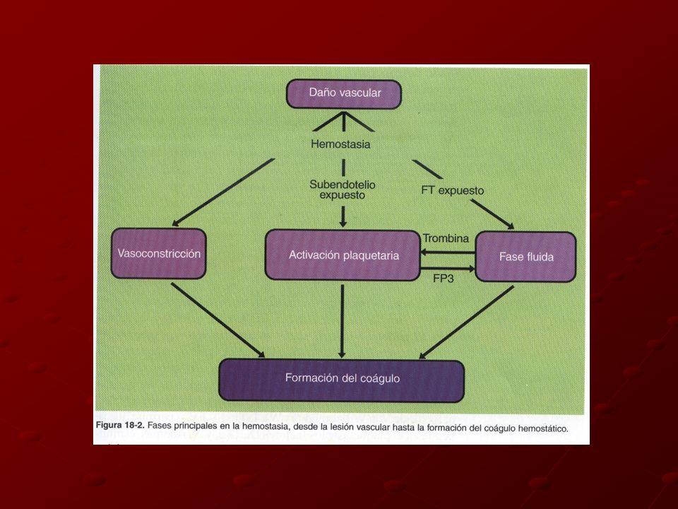 Membrana plaquetaria Fosfolípidos Ligandos para factores Va, VIIIa, IX, IXa, Xa Superficie ideal para reacciones hemostáticas Fibrinógeno plaquetario FXI, FV