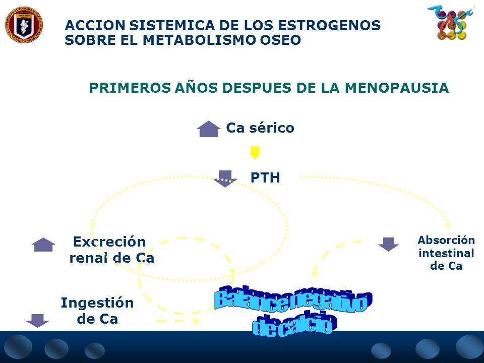 ACCION DE LOS ESTROGENOS EN EL TEJIDO OSEO Estrógenos Esqueleto Remodelaciónósea Formacion Reabsorción Sistémico Metabolismo de Ca/P Riñón Tiroides (c
