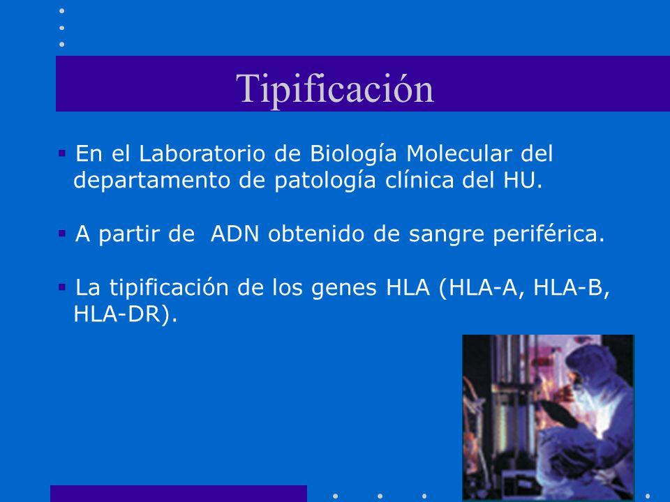 Tipificación En el Laboratorio de Biología Molecular del departamento de patología clínica del HU. A partir de ADN obtenido de sangre periférica. La t