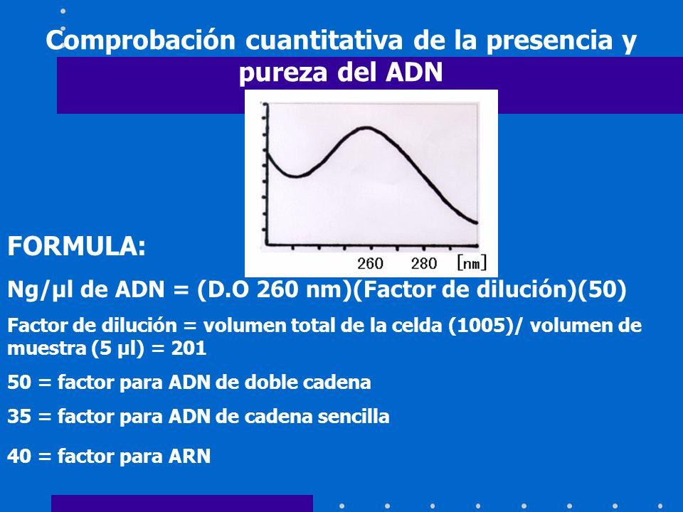 Comprobación cuantitativa de la presencia y pureza del ADN FORMULA: Ng/µl de ADN = (D.O 260 nm)(Factor de dilución)(50) Factor de dilución = volumen t