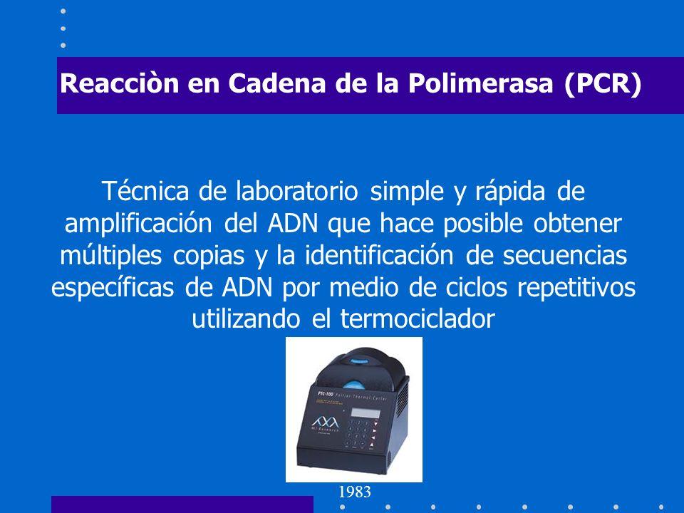 Reacciòn en Cadena de la Polimerasa (PCR) Técnica de laboratorio simple y rápida de amplificación del ADN que hace posible obtener múltiples copias y