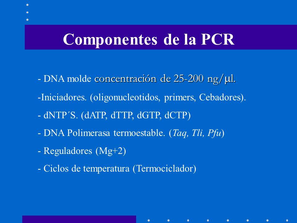 Componentes de la PCR concentración de 25-200 ng/ l. - DNA molde concentración de 25-200 ng/ l. -Iniciadores. (oligonucleotidos, primers, Cebadores).