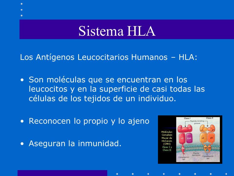 Sistema HLA Los Antígenos Leucocitarios Humanos – HLA: Son moléculas que se encuentran en los leucocitos y en la superficie de casi todas las células