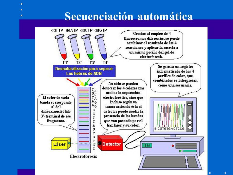 Secuenciación automática