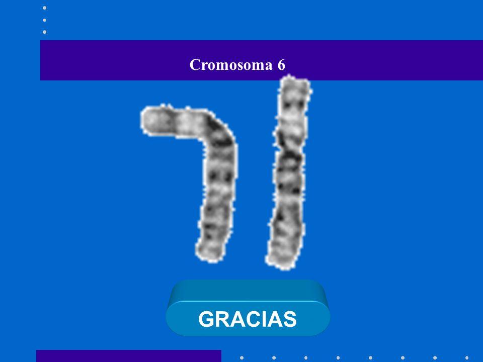 GRACIAS Cromosoma 6