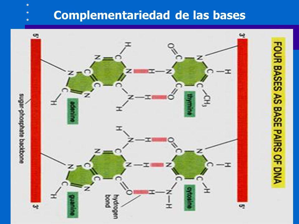 Genética Los genes del Sistema HLA se heredan siempre en bloque.