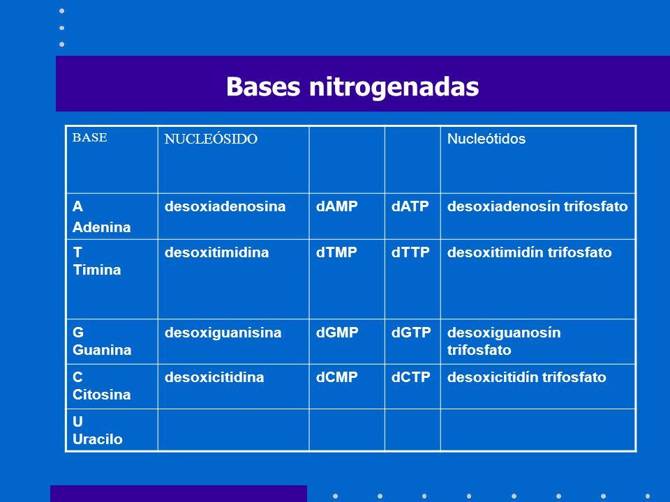 BASE NUCLEÓSIDO Nucleótidos A Adenina desoxiadenosinadAMPdATPdesoxiadenosín trifosfato T Timina desoxitimidinadTMPdTTPdesoxitimidín trifosfato G Guani