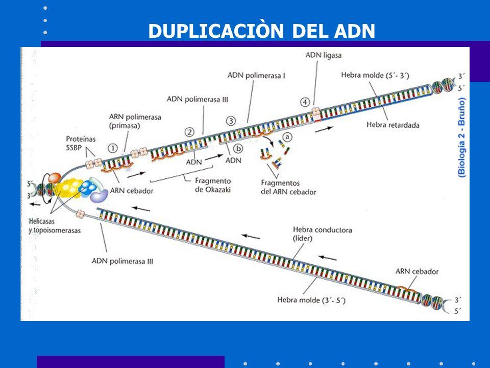 Componentes de la PCR concentración de 25-200 ng/ l.