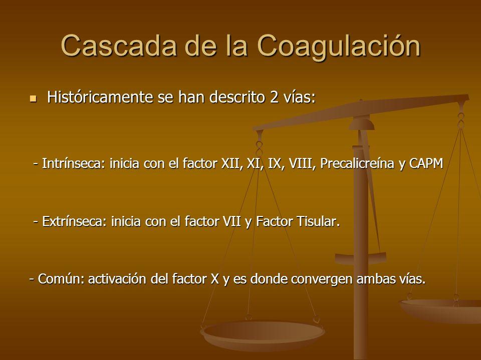 Cascada de la Coagulación Históricamente se han descrito 2 vías: Históricamente se han descrito 2 vías: - Intrínseca: inicia con el factor XII, XI, IX