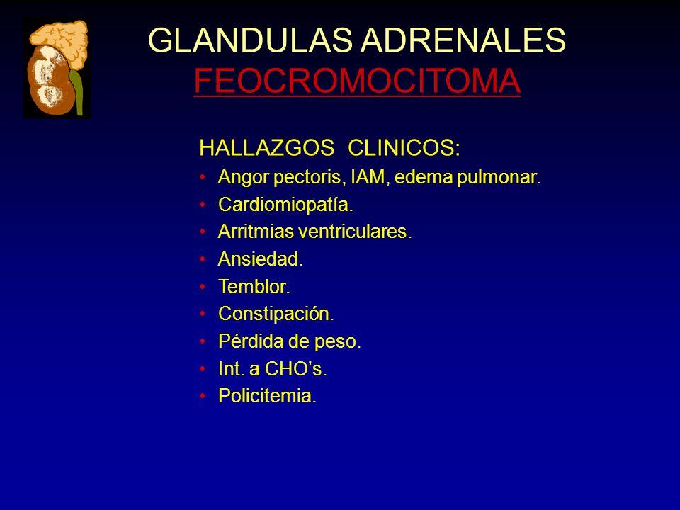 GLANDULAS ADRENALES FEOCROMOCITOMA HALLAZGOS CLINICOS: Angor pectoris, IAM, edema pulmonar. Cardiomiopatía. Arritmias ventriculares. Ansiedad. Temblor