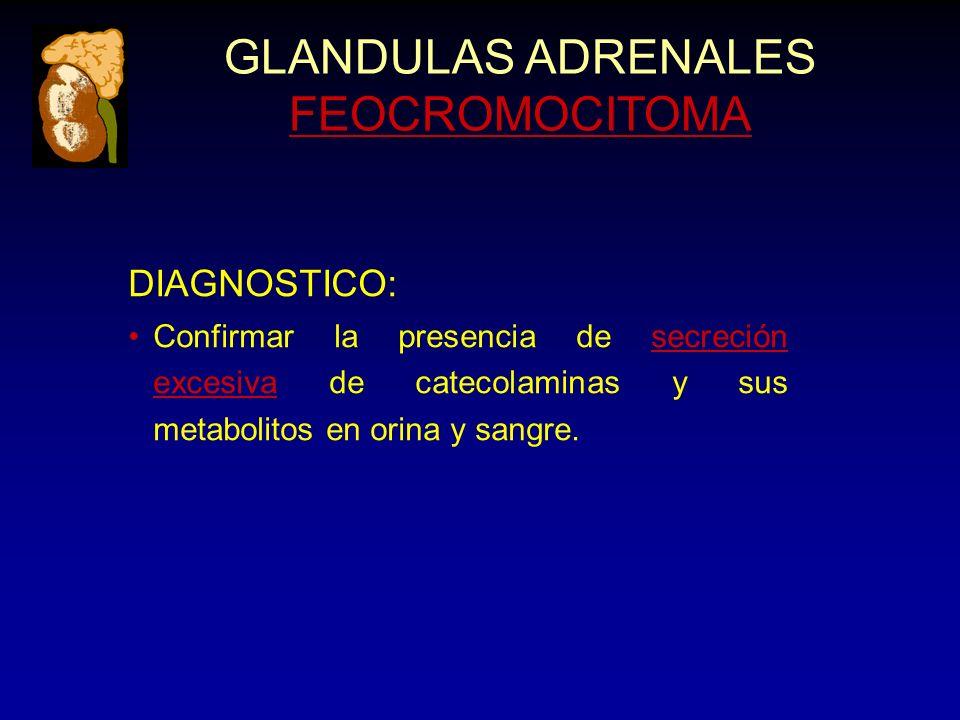 GLANDULAS ADRENALES FEOCROMOCITOMA DIAGNOSTICO: Confirmar la presencia de secreción excesiva de catecolaminas y sus metabolitos en orina y sangre.