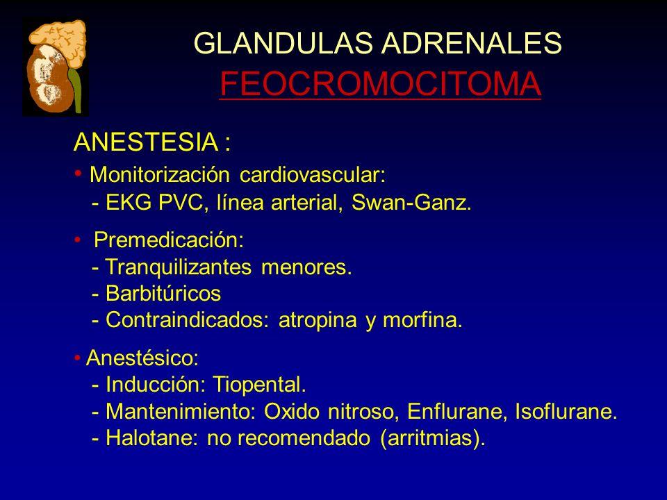 GLANDULAS ADRENALES FEOCROMOCITOMA ANESTESIA : Monitorización cardiovascular: - EKG PVC, línea arterial, Swan-Ganz. Premedicación: - Tranquilizantes m