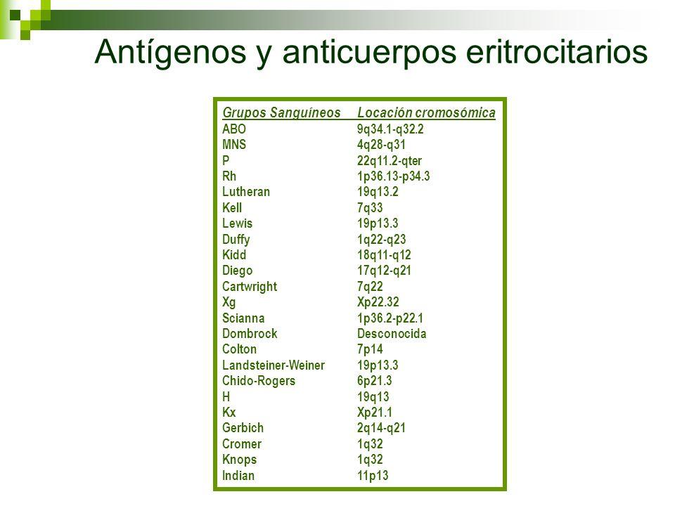 Antígenos y anticuerpos eritrocitarios Grupos SanguíneosLocación cromosómica ABO9q34.1-q32.2 MNS4q28-q31 P22q11.2-qter Rh1p36.13-p34.3 Lutheran19q13.2