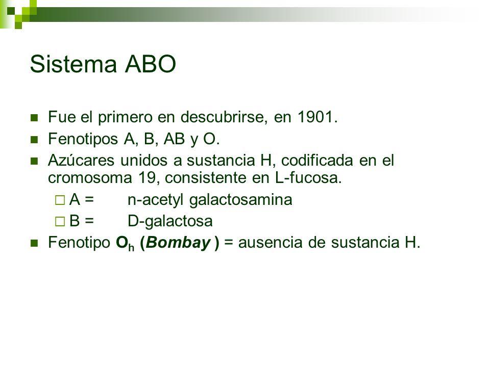 Sistema ABO Fue el primero en descubrirse, en 1901. Fenotipos A, B, AB y O. Azúcares unidos a sustancia H, codificada en el cromosoma 19, consistente