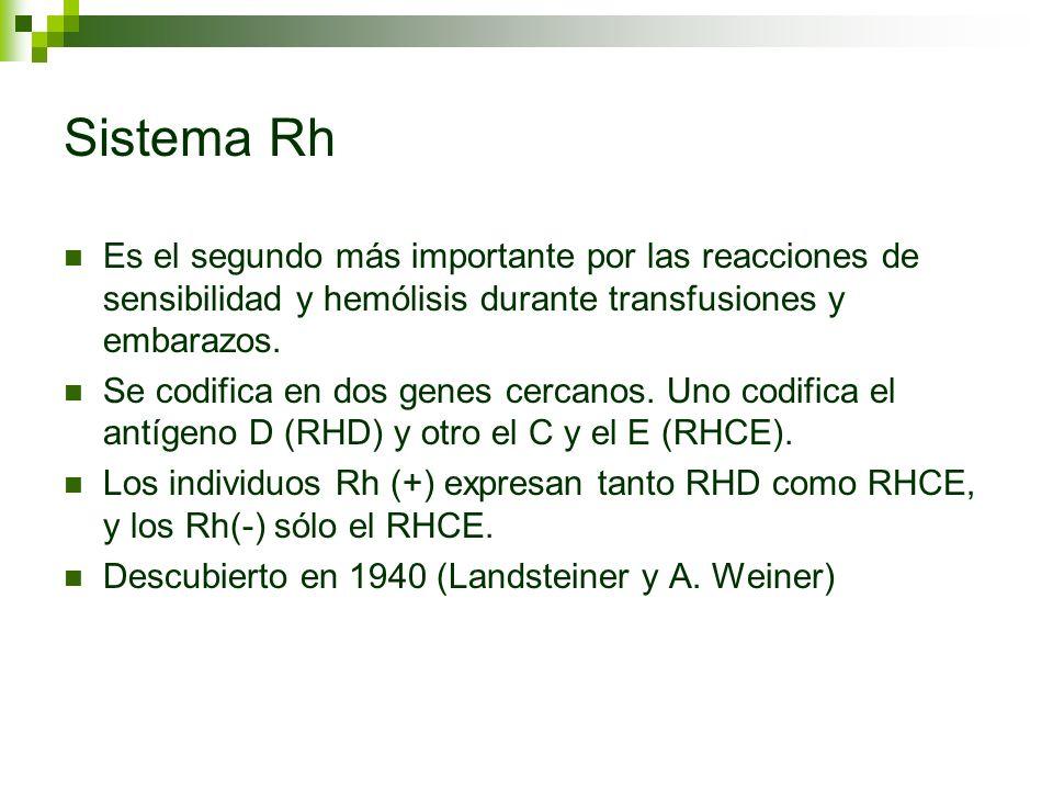 Sistema Rh Es el segundo más importante por las reacciones de sensibilidad y hemólisis durante transfusiones y embarazos. Se codifica en dos genes cer