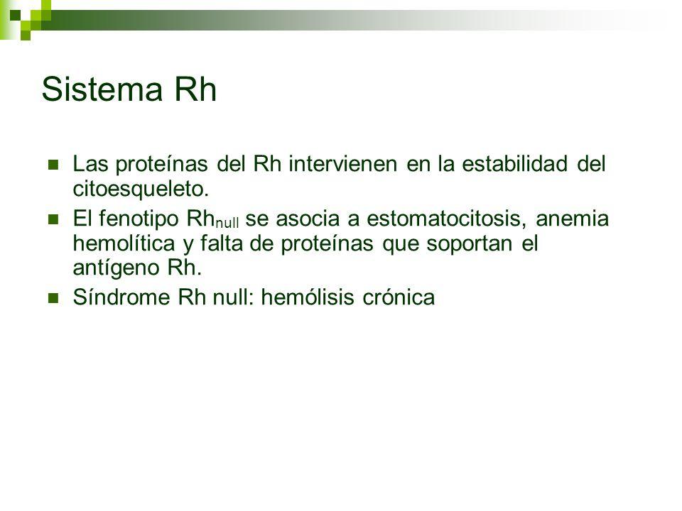 Sistema Rh Las proteínas del Rh intervienen en la estabilidad del citoesqueleto. El fenotipo Rh null se asocia a estomatocitosis, anemia hemolítica y