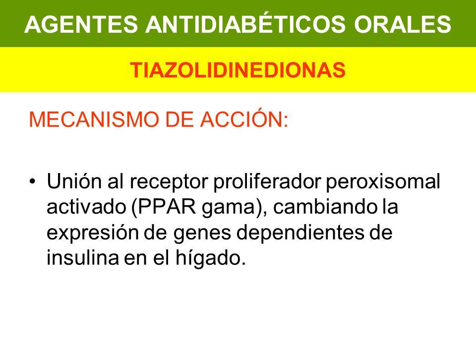 MECANISMO DE ACCIÓN: Unión al receptor proliferador peroxisomal activado (PPAR gama), cambiando la expresión de genes dependientes de insulina en el h