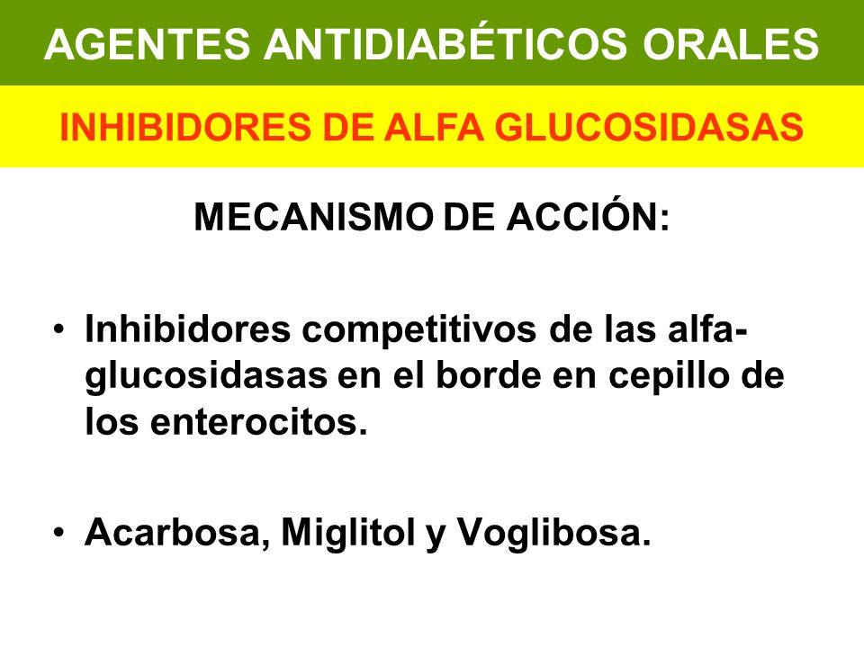 MECANISMO DE ACCIÓN: Inhibidores competitivos de las alfa- glucosidasas en el borde en cepillo de los enterocitos. Acarbosa, Miglitol y Voglibosa. AGE