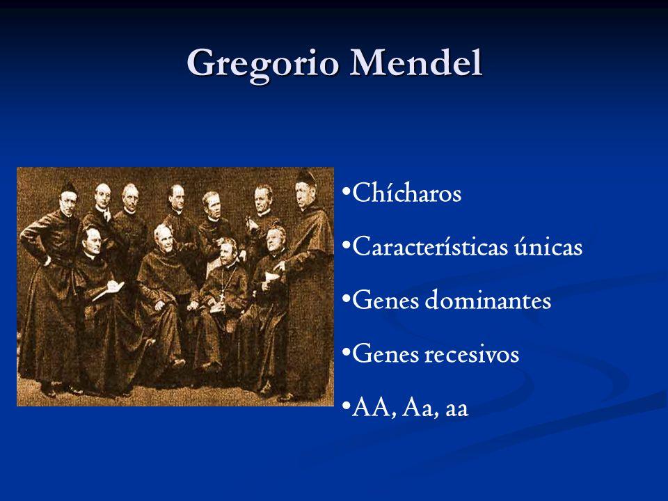Gregorio Mendel Chícharos Características únicas Genes dominantes Genes recesivos AA, Aa, aa