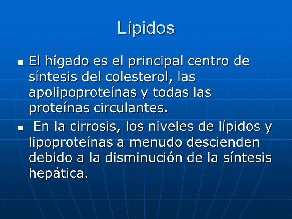 Lípidos El hígado es el principal centro de síntesis del colesterol, las apolipoproteínas y todas las proteínas circulantes. El hígado es el principal