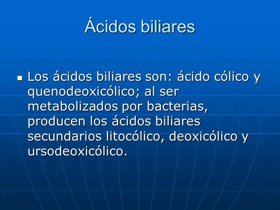 Ácidos biliares Los ácidos biliares son: ácido cólico y quenodeoxicólico; al ser metabolizados por bacterias, producen los ácidos biliares secundarios