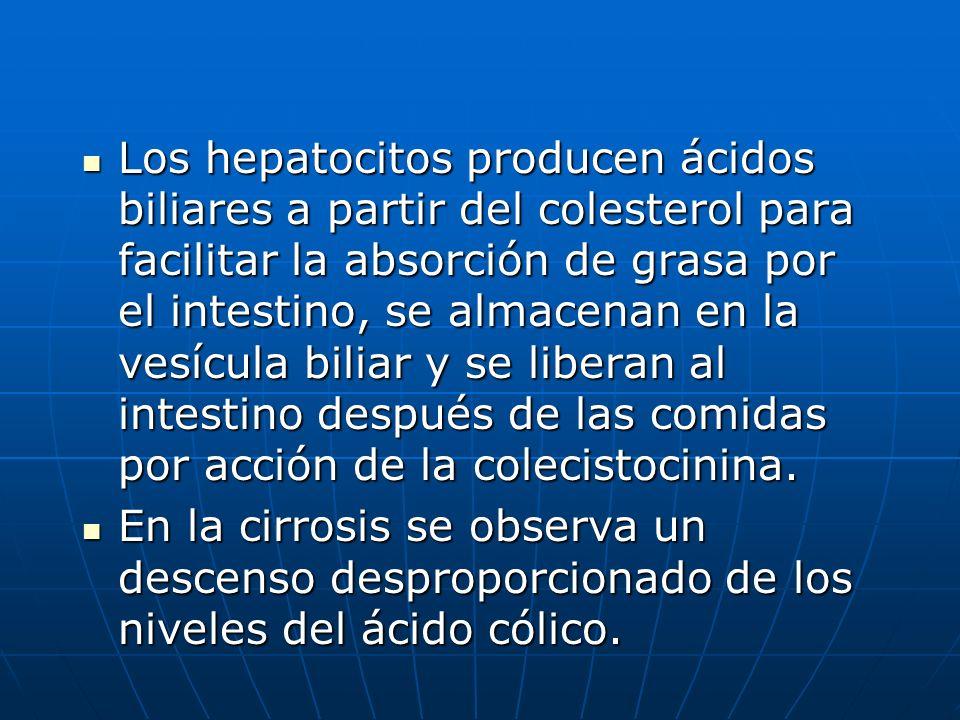 Los hepatocitos producen ácidos biliares a partir del colesterol para facilitar la absorción de grasa por el intestino, se almacenan en la vesícula bi