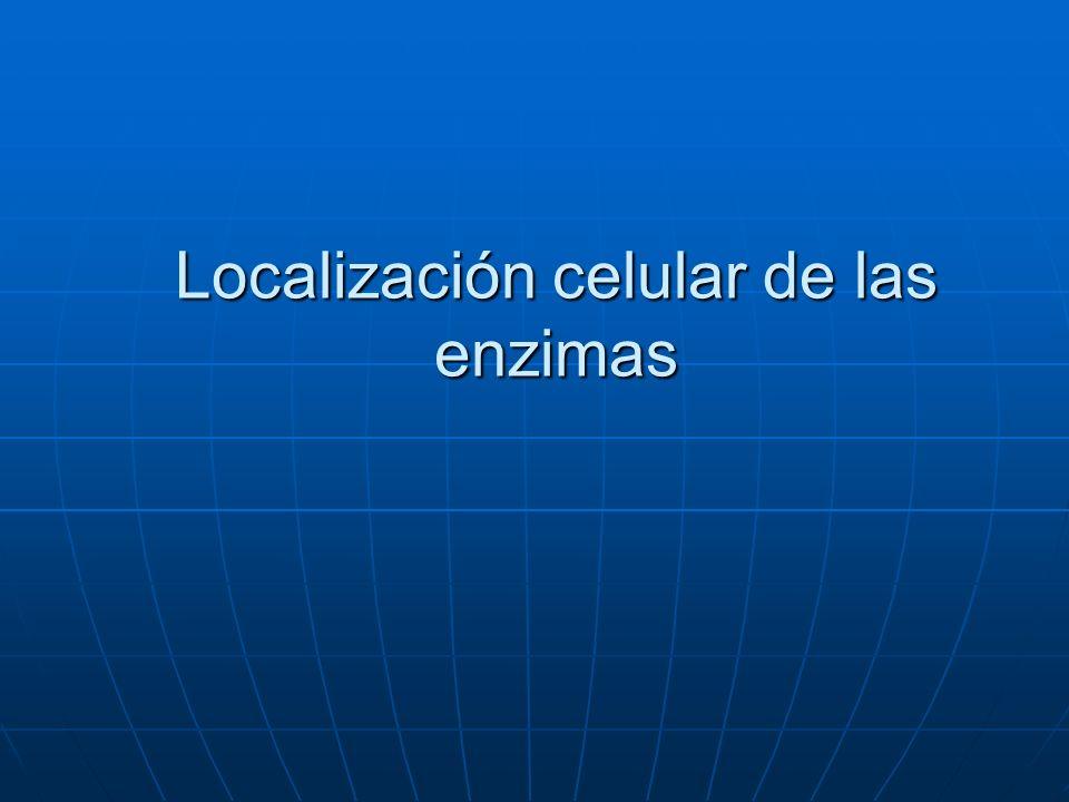 Localización celular de las enzimas