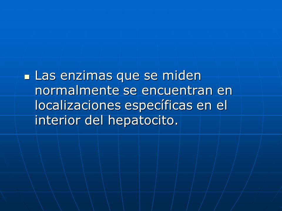 Las enzimas que se miden normalmente se encuentran en localizaciones específicas en el interior del hepatocito. Las enzimas que se miden normalmente s