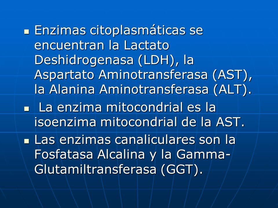 Enzimas citoplasmáticas se encuentran la Lactato Deshidrogenasa (LDH), la Aspartato Aminotransferasa (AST), la Alanina Aminotransferasa (ALT). Enzimas
