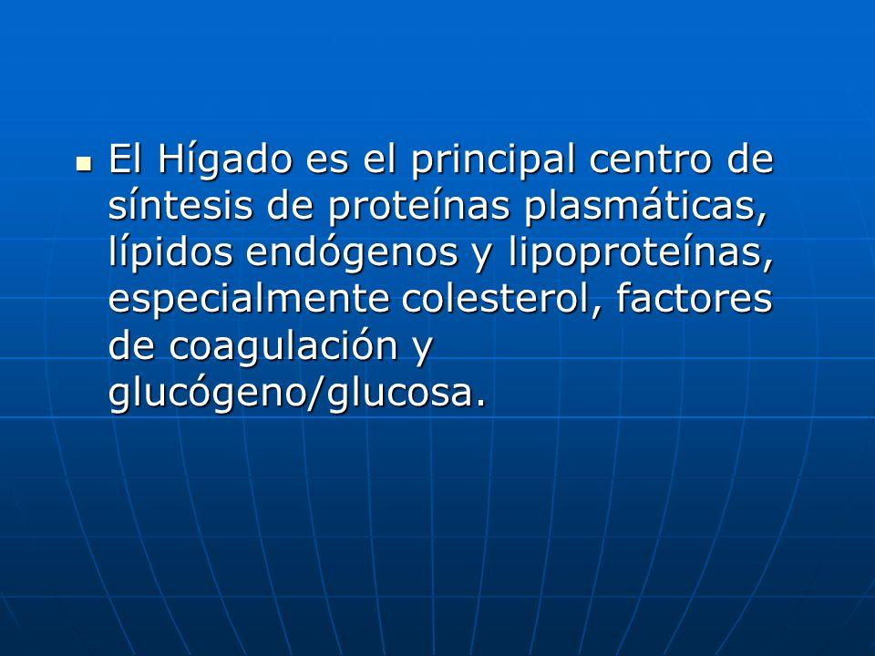 El Hígado es el principal centro de síntesis de proteínas plasmáticas, lípidos endógenos y lipoproteínas, especialmente colesterol, factores de coagul