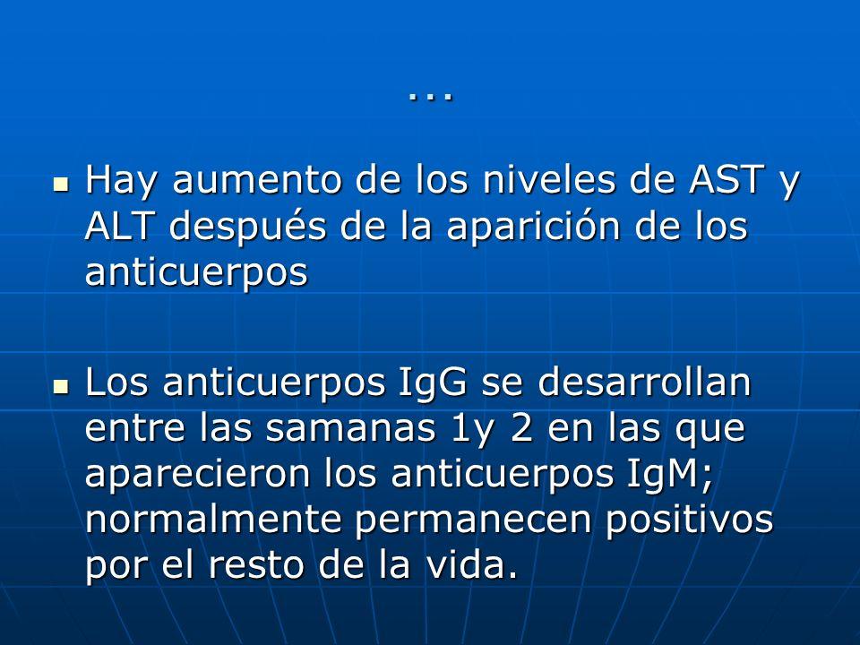 … Hay aumento de los niveles de AST y ALT después de la aparición de los anticuerpos Hay aumento de los niveles de AST y ALT después de la aparición d