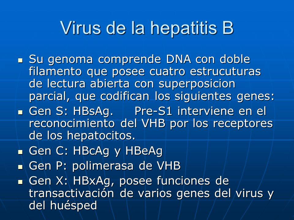 Virus de la hepatitis B Su genoma comprende DNA con doble filamento que posee cuatro estrucuturas de lectura abierta con superposicion parcial, que co