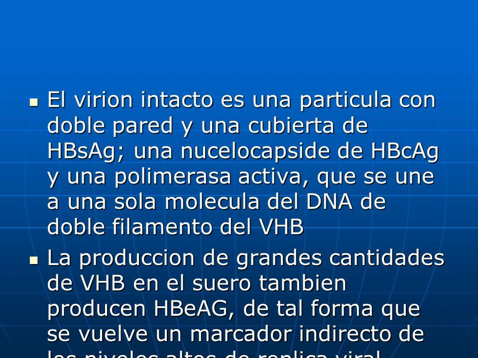 El virion intacto es una particula con doble pared y una cubierta de HBsAg; una nucelocapside de HBcAg y una polimerasa activa, que se une a una sola
