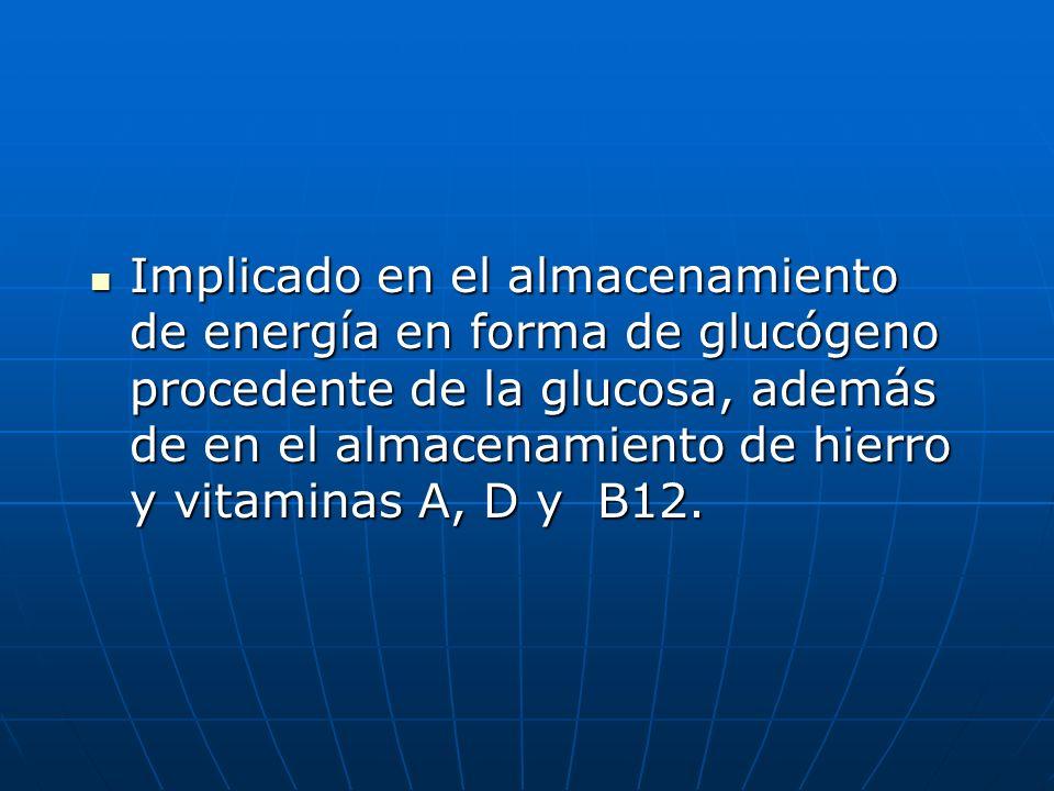 Implicado en el almacenamiento de energía en forma de glucógeno procedente de la glucosa, además de en el almacenamiento de hierro y vitaminas A, D y