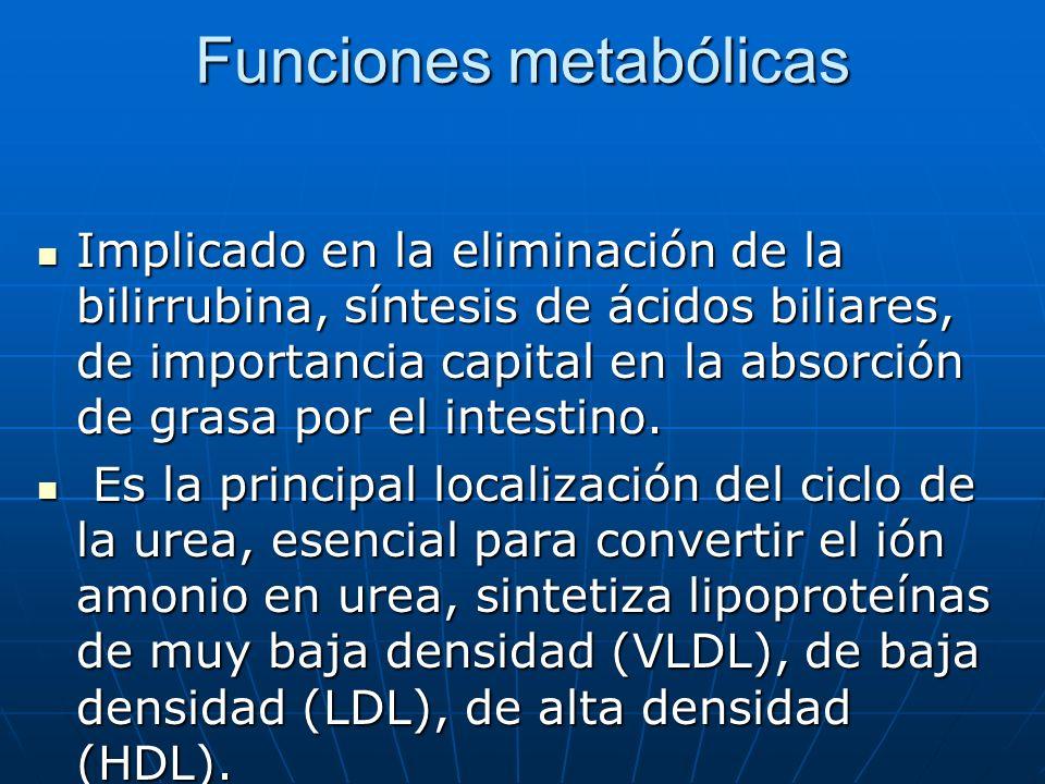 Funciones metabólicas Implicado en la eliminación de la bilirrubina, síntesis de ácidos biliares, de importancia capital en la absorción de grasa por
