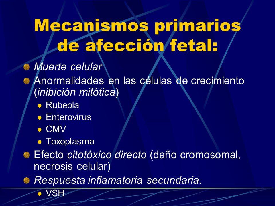 Mecanismos primarios de afección fetal: Muerte celular Anormalidades en las células de crecimiento (inibición mitótica) Rubeola Enterovirus CMV Toxopl