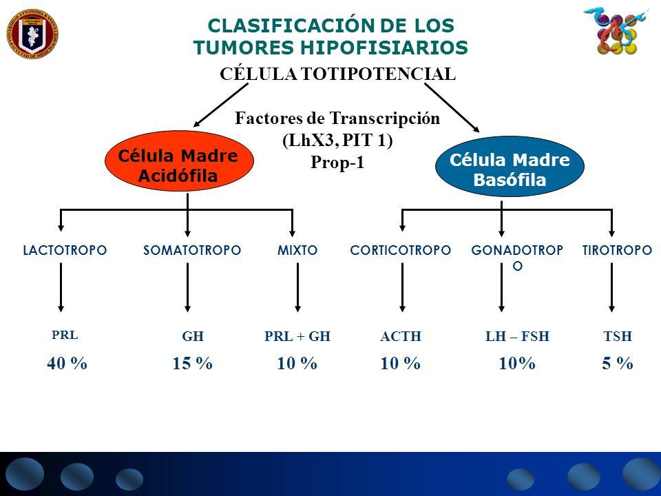 CLASIFICACIÓN DE LOS TUMORES HIPOFISIARIOS CÉLULA TOTIPOTENCIAL Factores de Transcripción (LhX3, PIT 1) Prop-1 Célula Madre Acidófila Célula Madre Bas